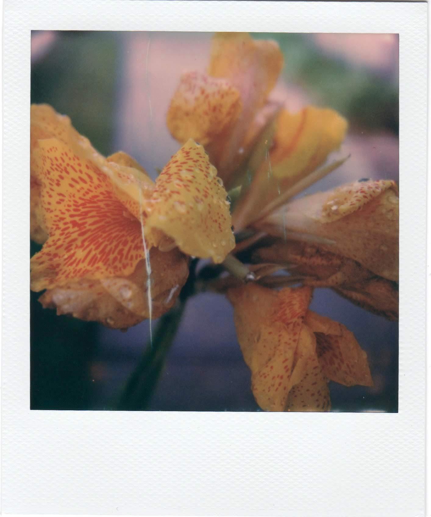 YellowFlowerPolaroids 1.jpg