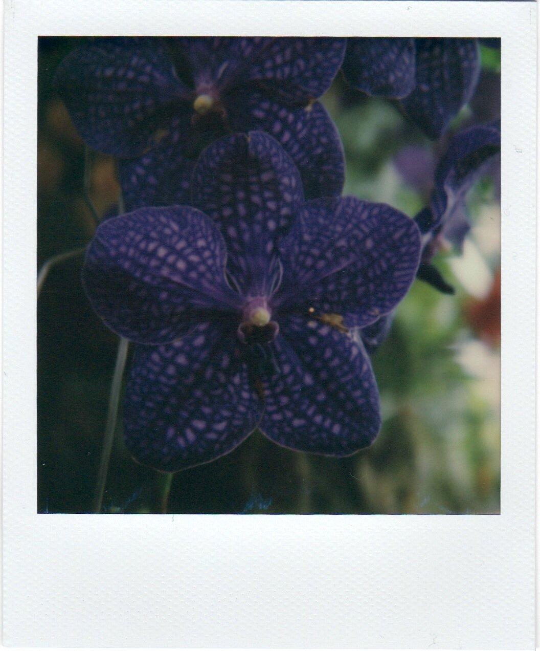 FlowersPolaroids 4.jpeg