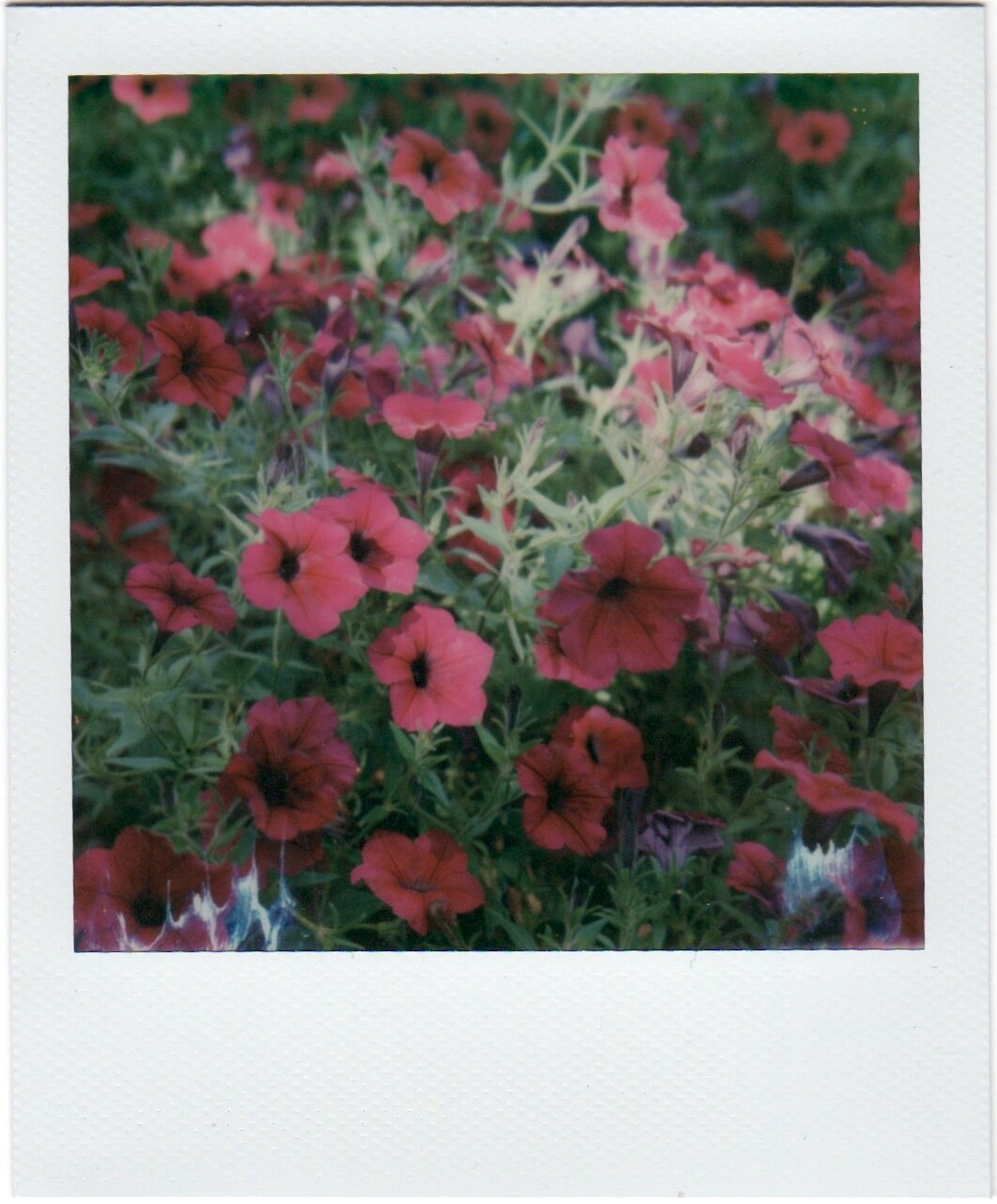 FlowersPolaroids 3.jpeg
