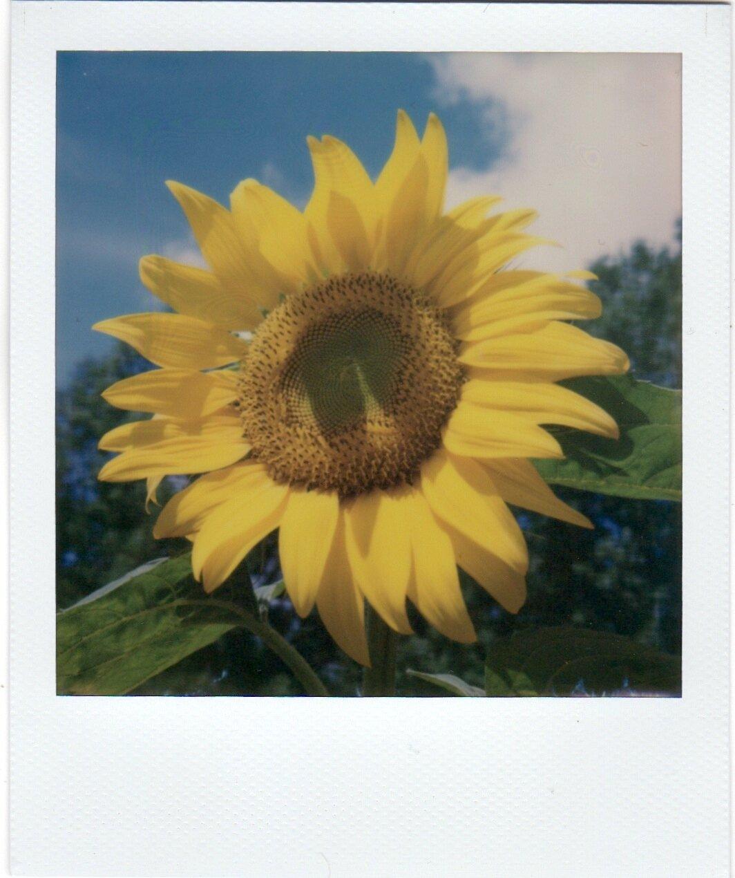 FlowersPolaroids 6.jpeg