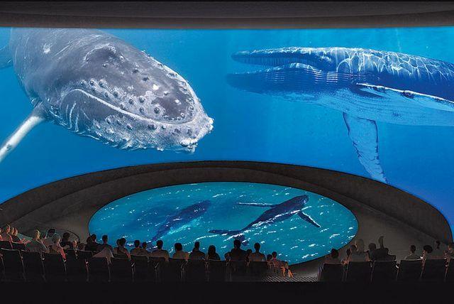 Credits: Aquarium of the Pacific