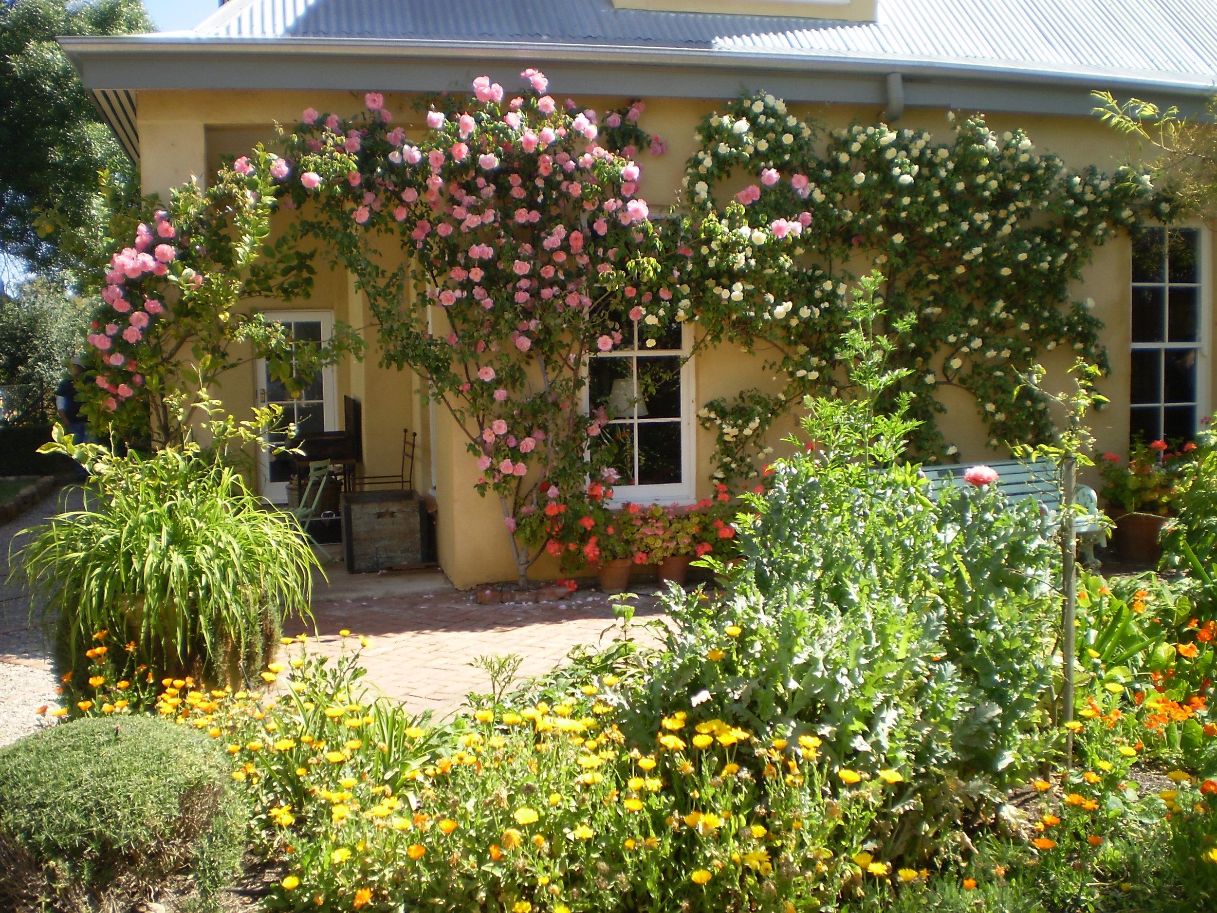 Glorious Roses at Al Ru Farm