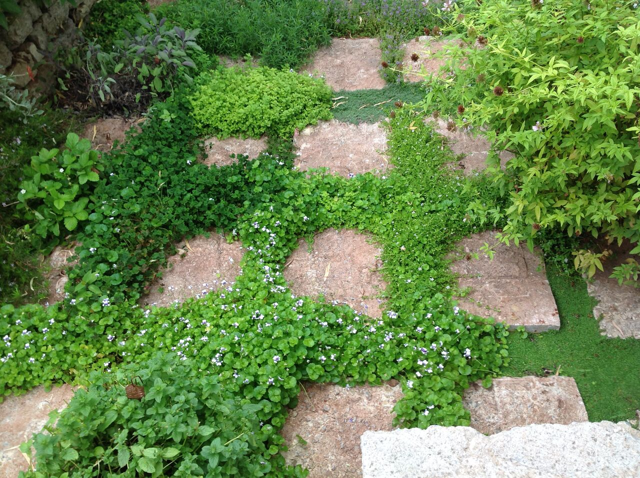 Ground Covers At Evette Sunset Garden