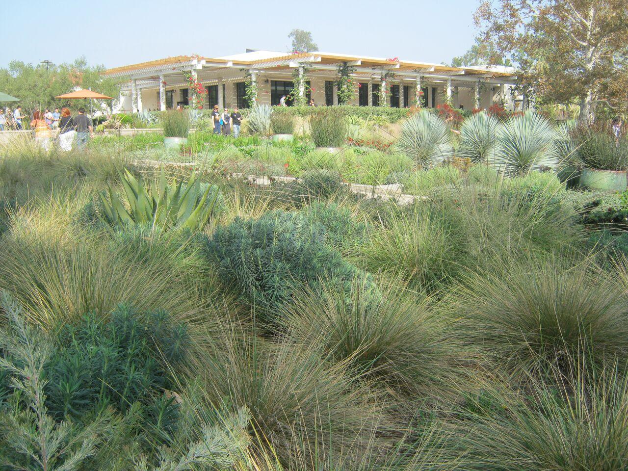 INTERNATIONAL Mediterranean garden society -