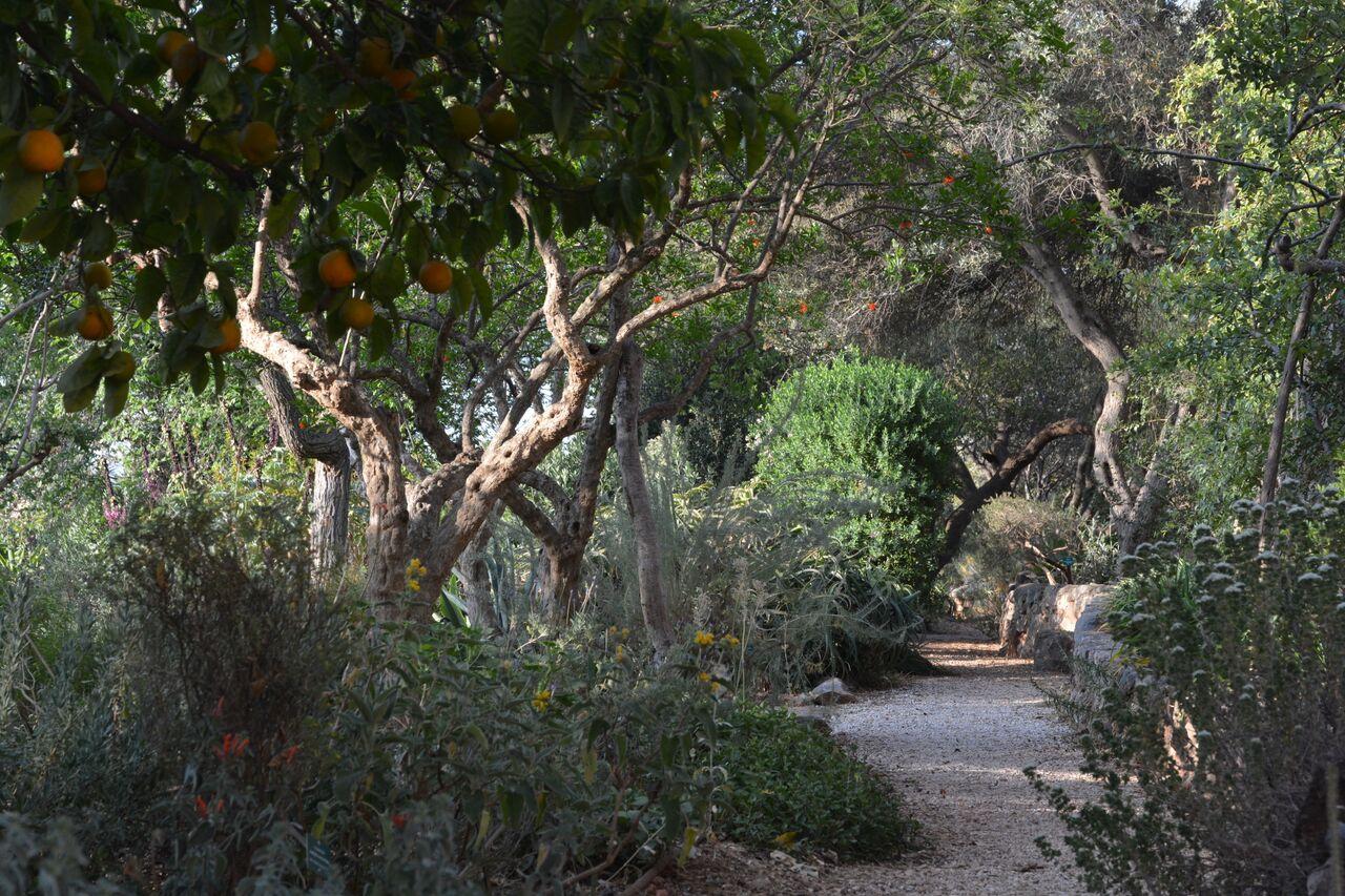 Citrus And Olives At Sparoza