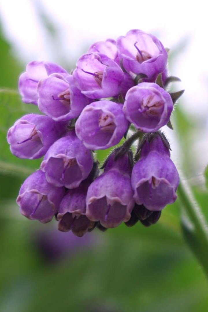 The underrated skincare ingredient we all love - Allantoin ...