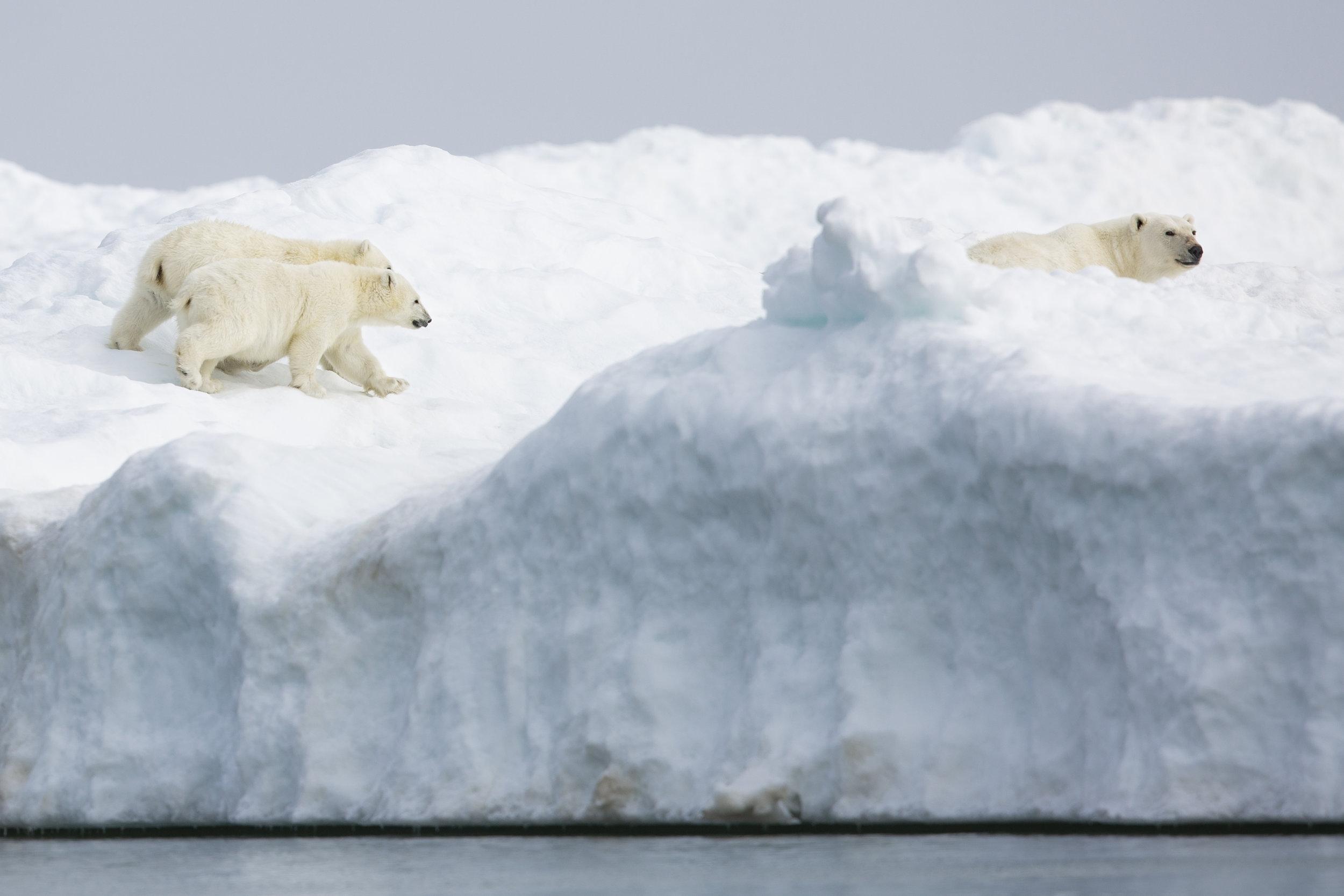 Family on Ice Floe