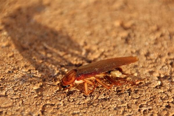 cockroach-3116191_1920 (600 x 400).jpg