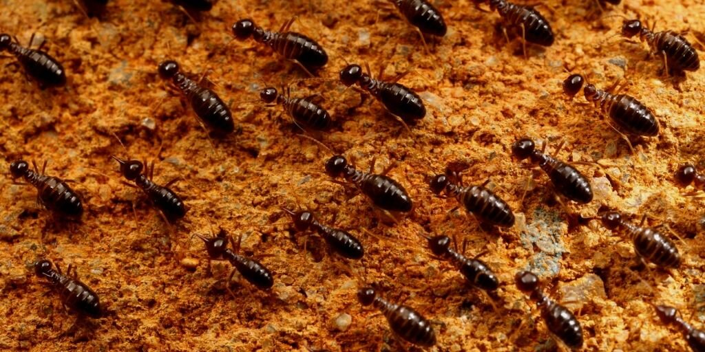 What Do You Need To Know About Termites In Myanmar Titan