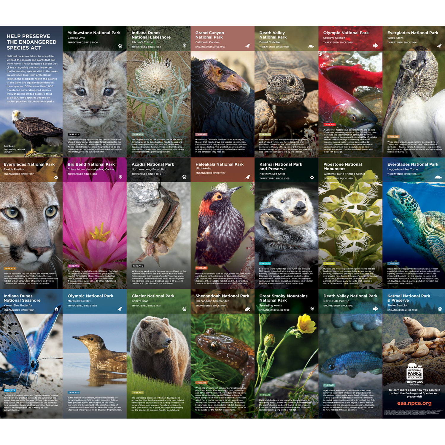 Endangered Species Act – Poster