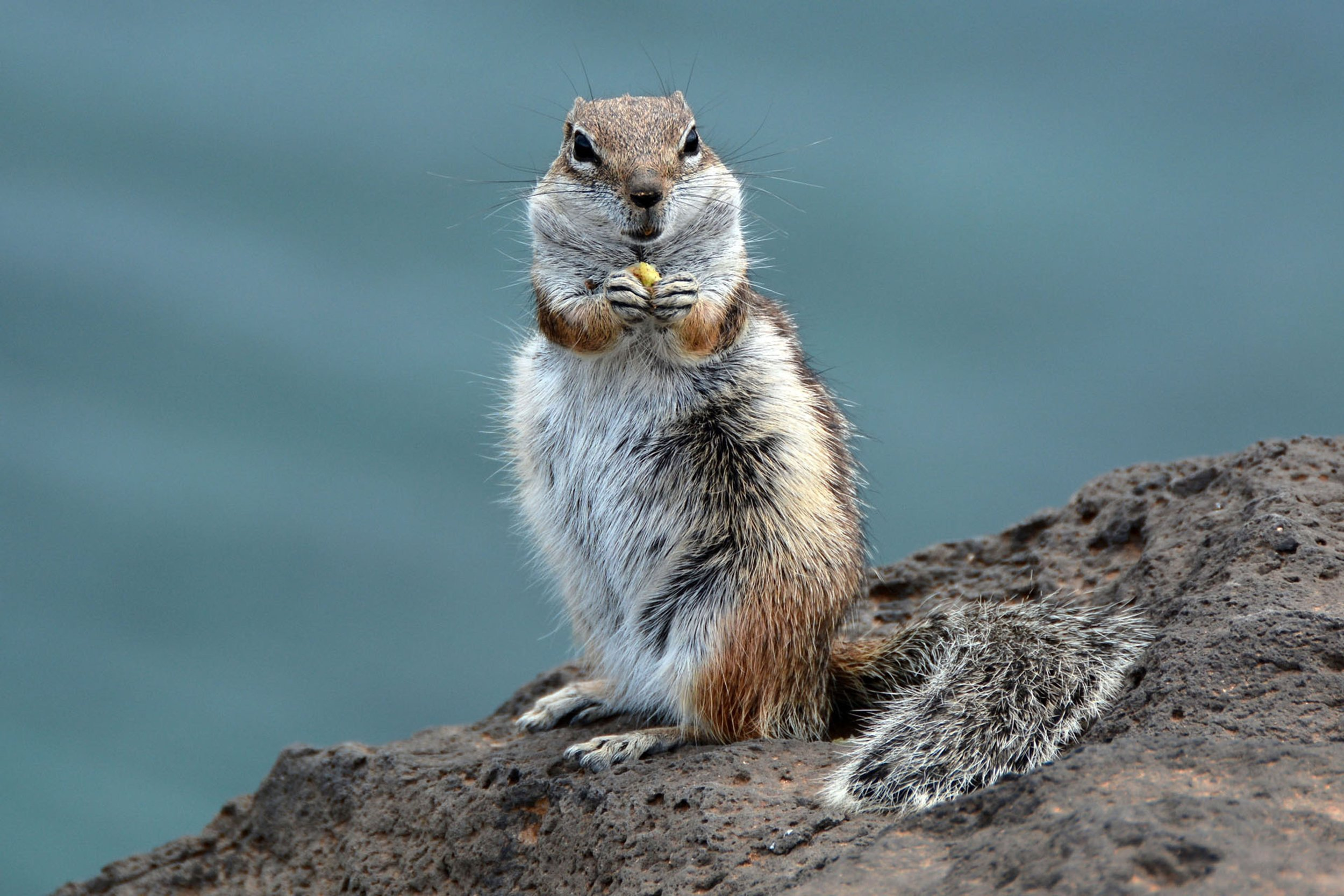 Figure 2 :Hungry Squirrel