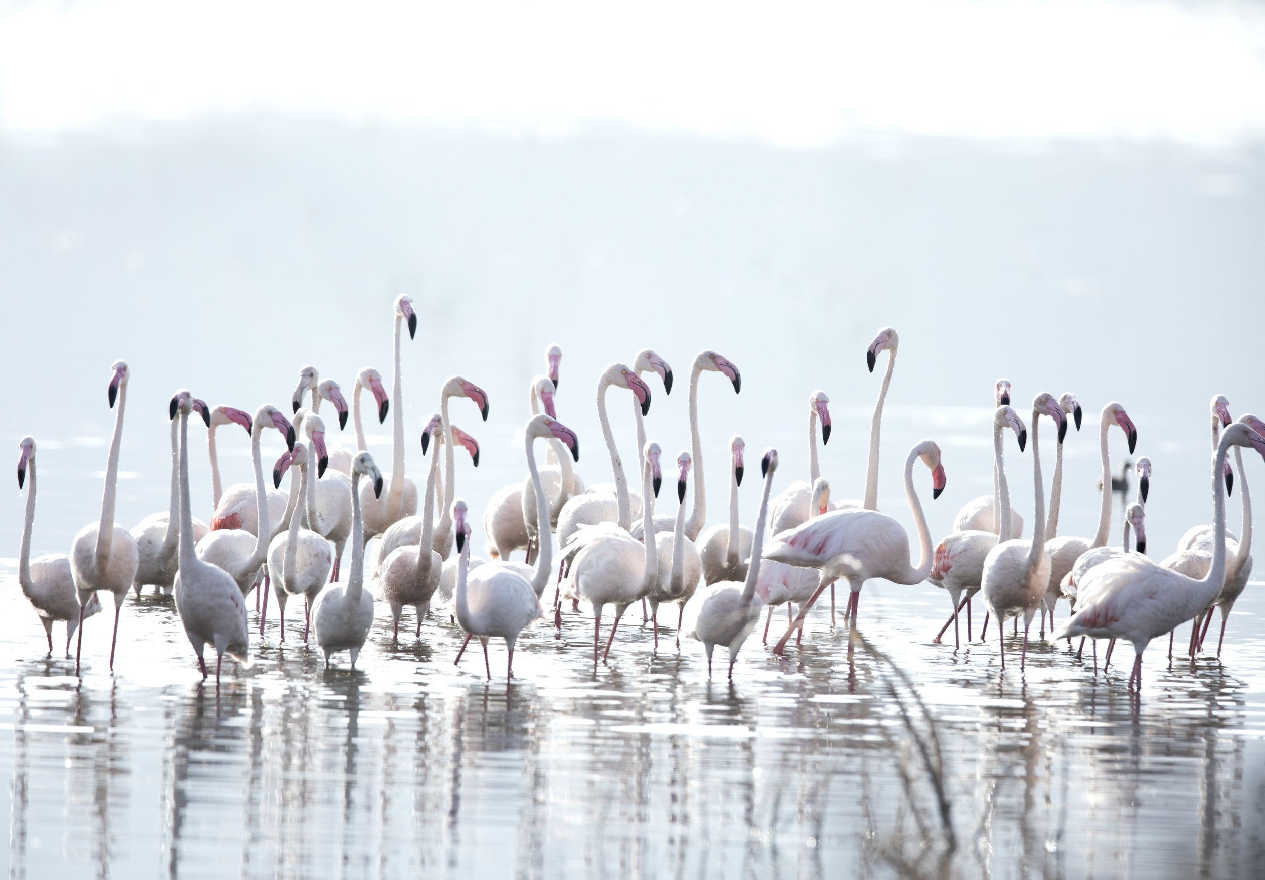 Flamingos_3041.jpg