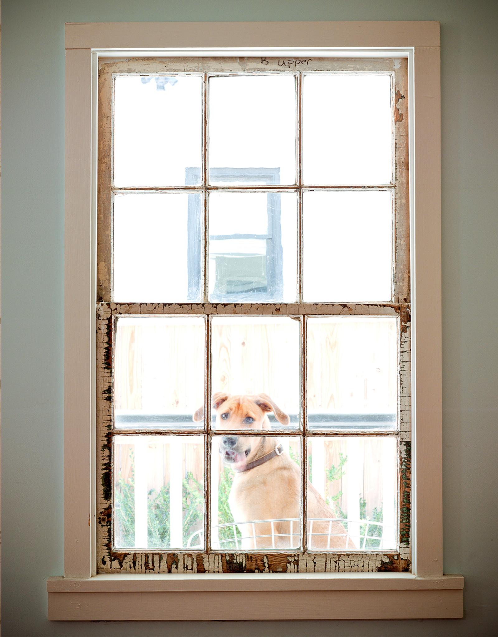 Hope and Union Dog.jpg