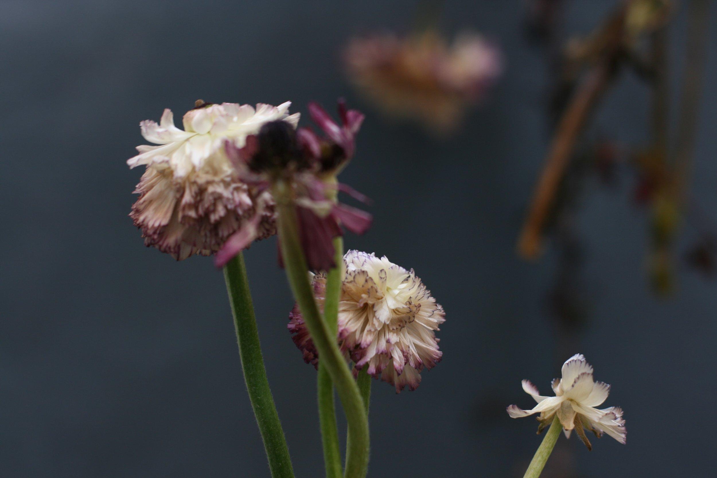 tatiana-sarasa-artist-photography-flowers-min.JPG