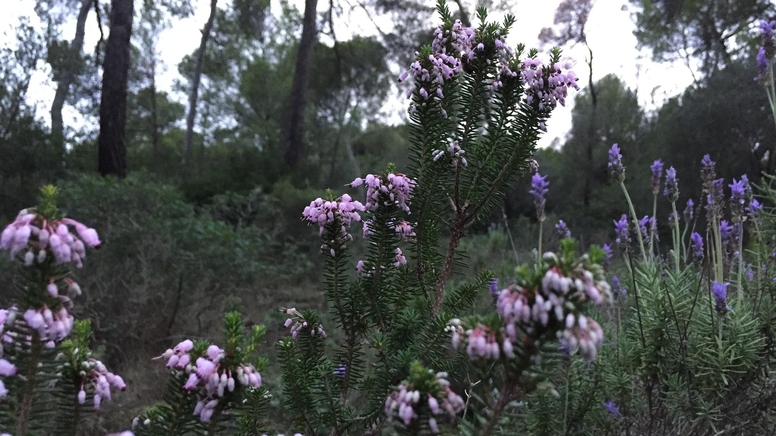 Con Intención - Reconectar con la belleza de la naturaleza