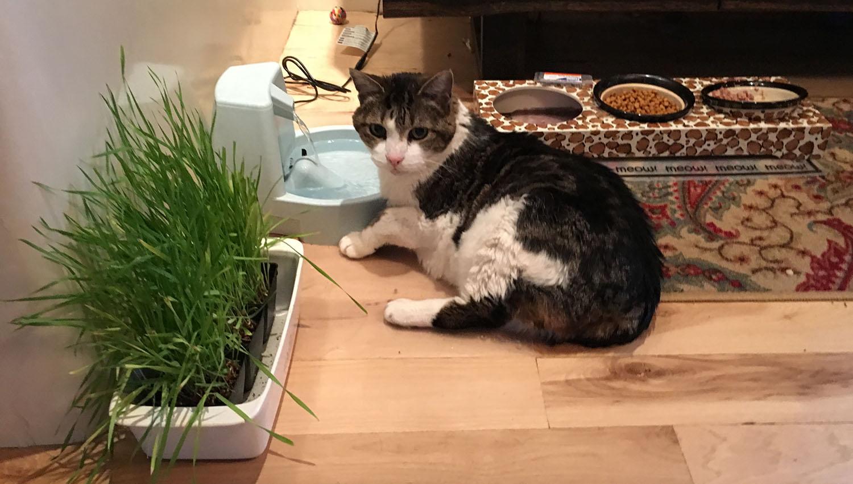 cat-drinking-water.jpg