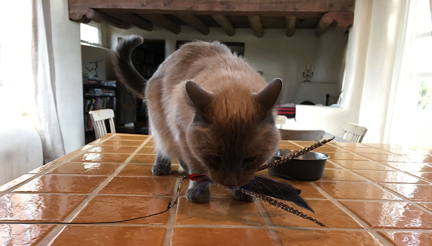 cat-feather-toy.jpg