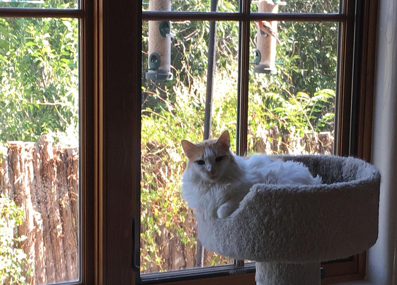 cat-in-window.jpg