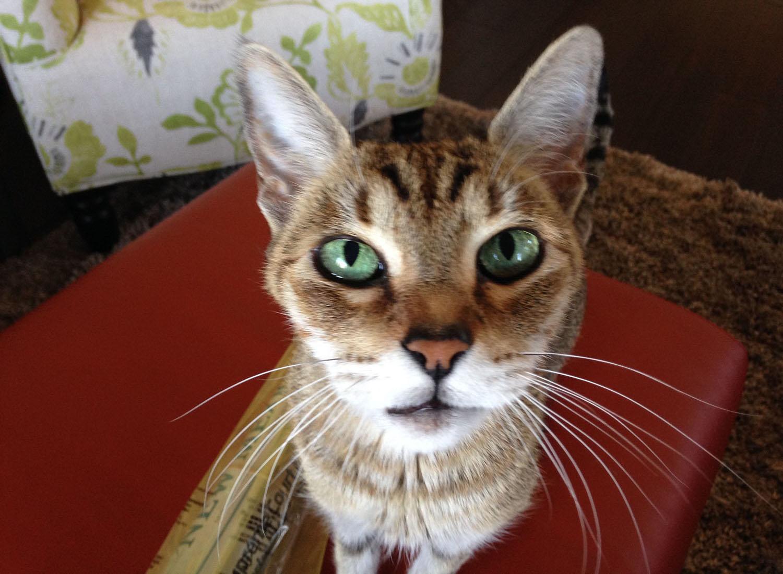 cat-closeup.jpg