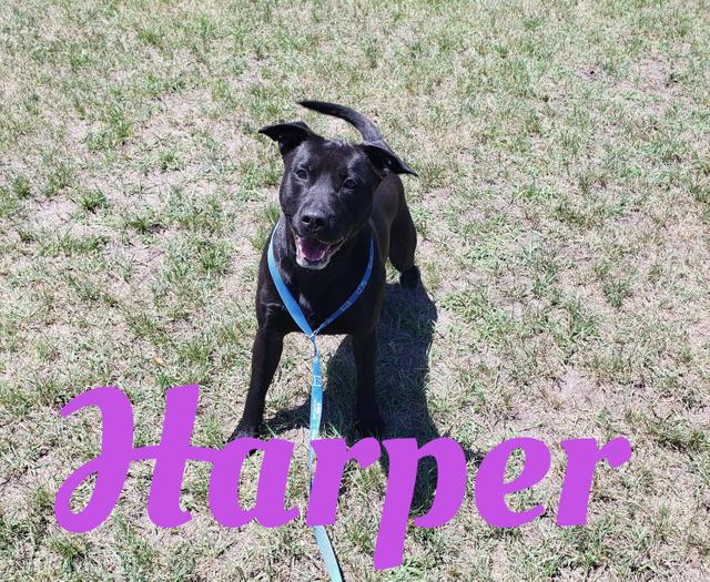 HARPERFor More Information, please email or call:info@poundbuddies.org -