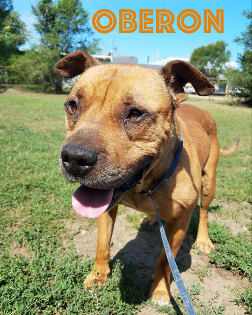 OBERON (FOSTER)For More Information, please email or call:info@poundbuddies.org -