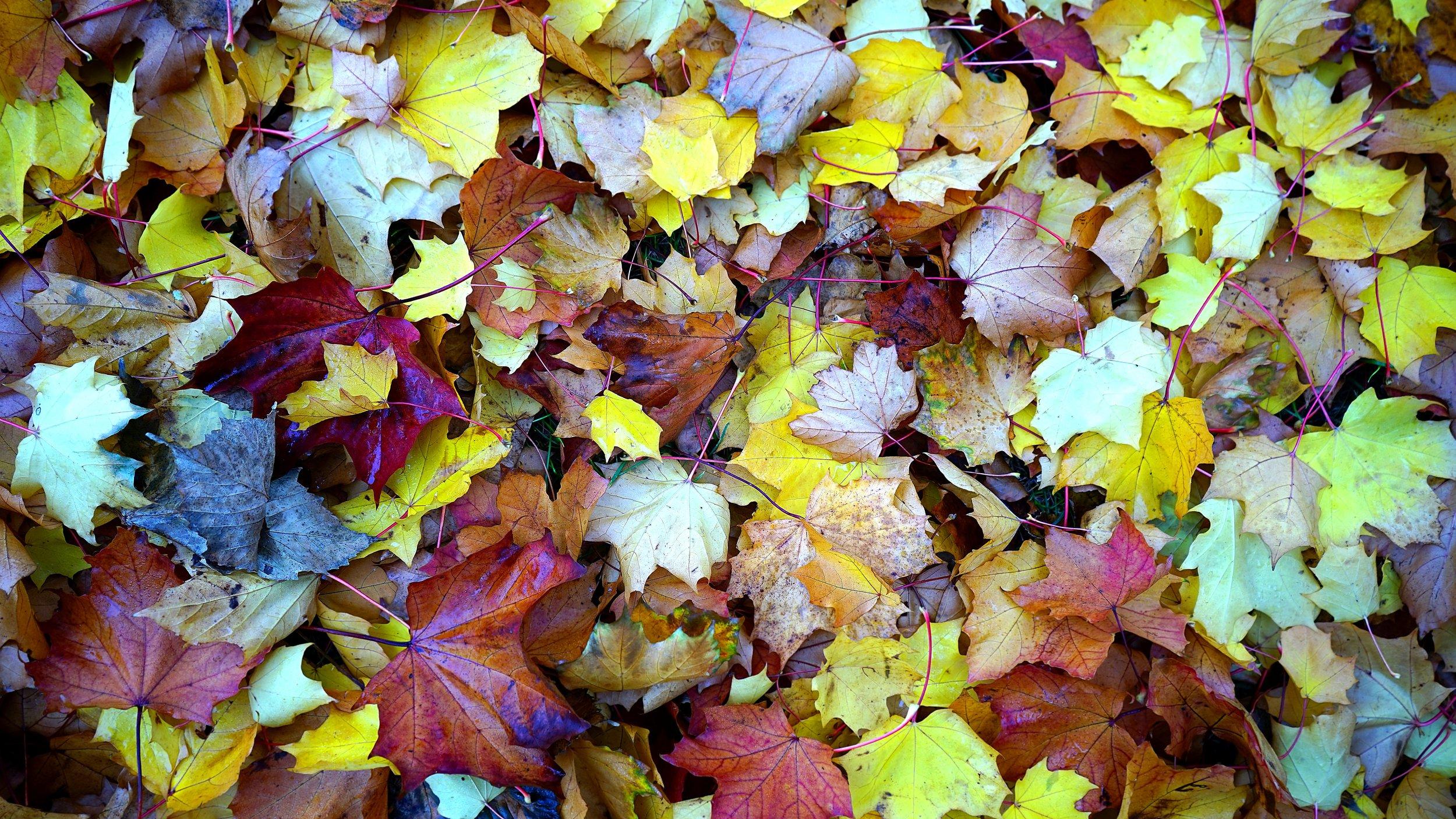 abstract-autumn-autumn-leaves-213613.jpg