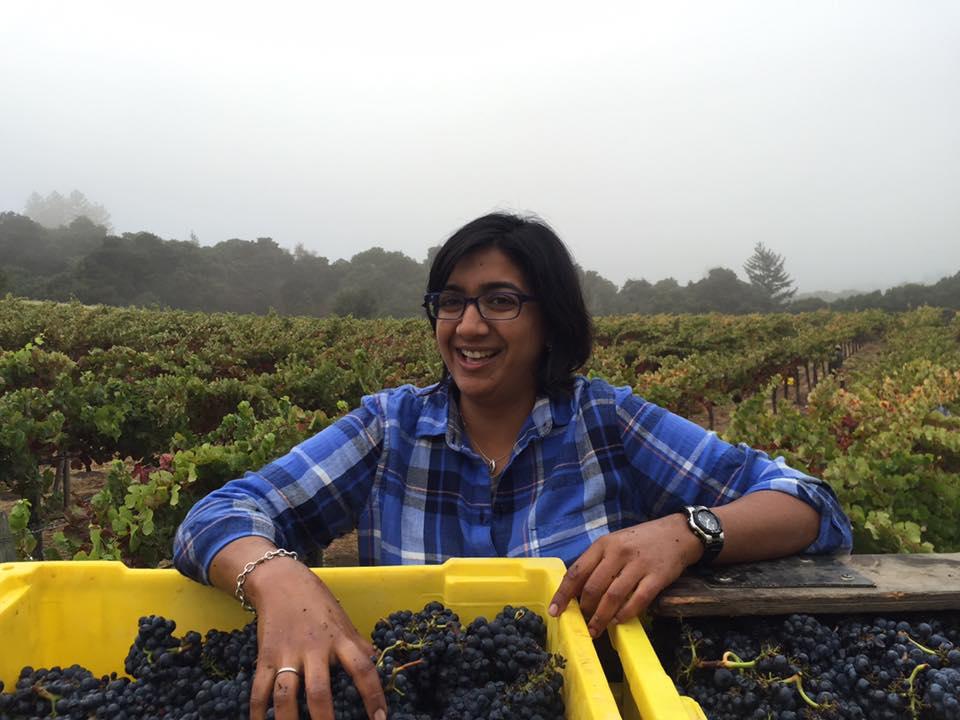 Shalini overseeing the 2016 harvest at the Neely's Spring Ridge Vineyard (Santa Cruz Mountains AVA).
