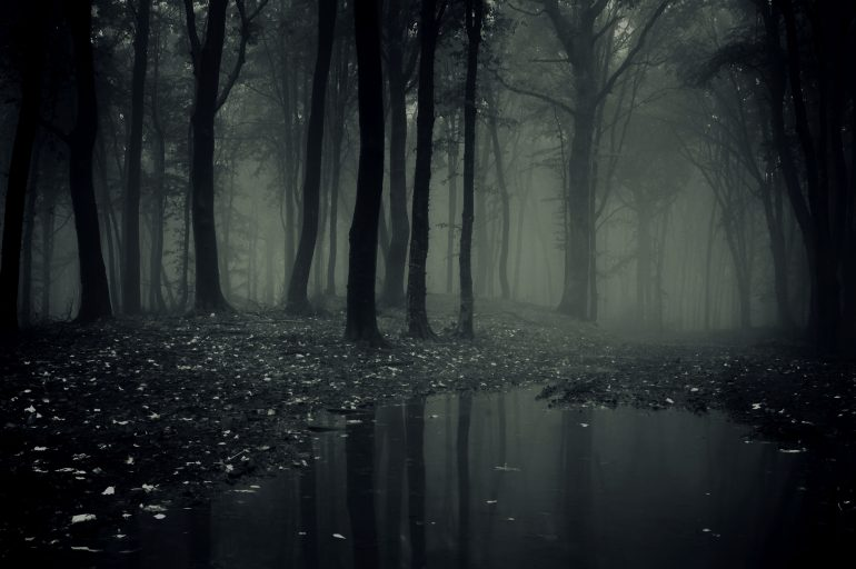 Full-Hd-Of-Scary-Forest-Wallpaper-Creepy-Images-Mobile-770x512.jpg