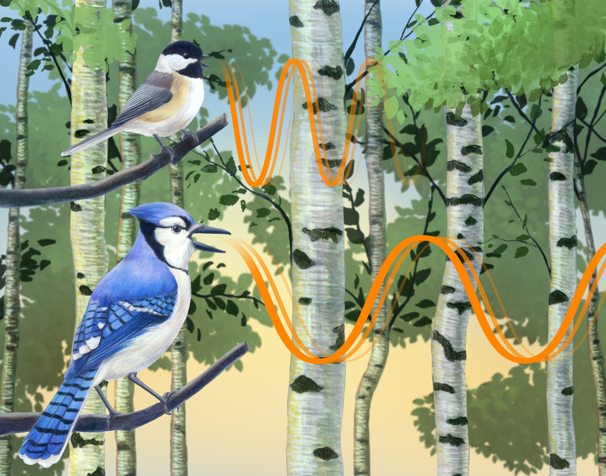 The Acoustic Adaptation Hypothesis