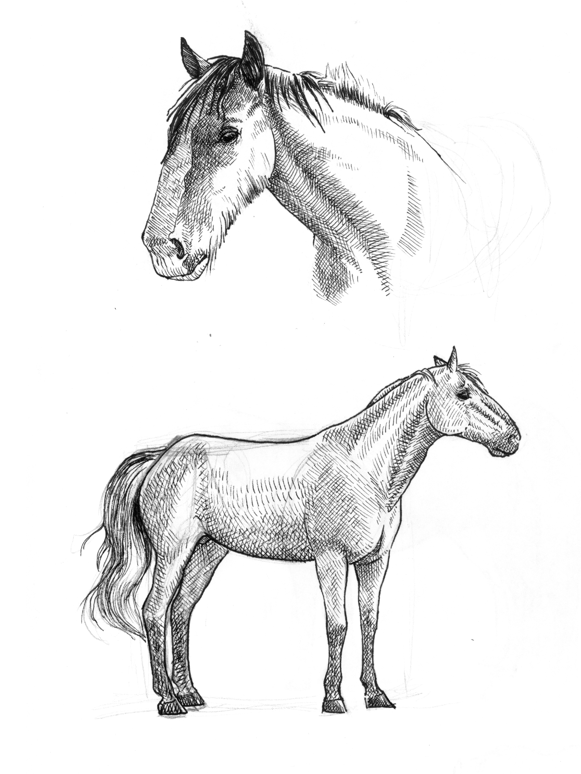 horsesketches.jpg