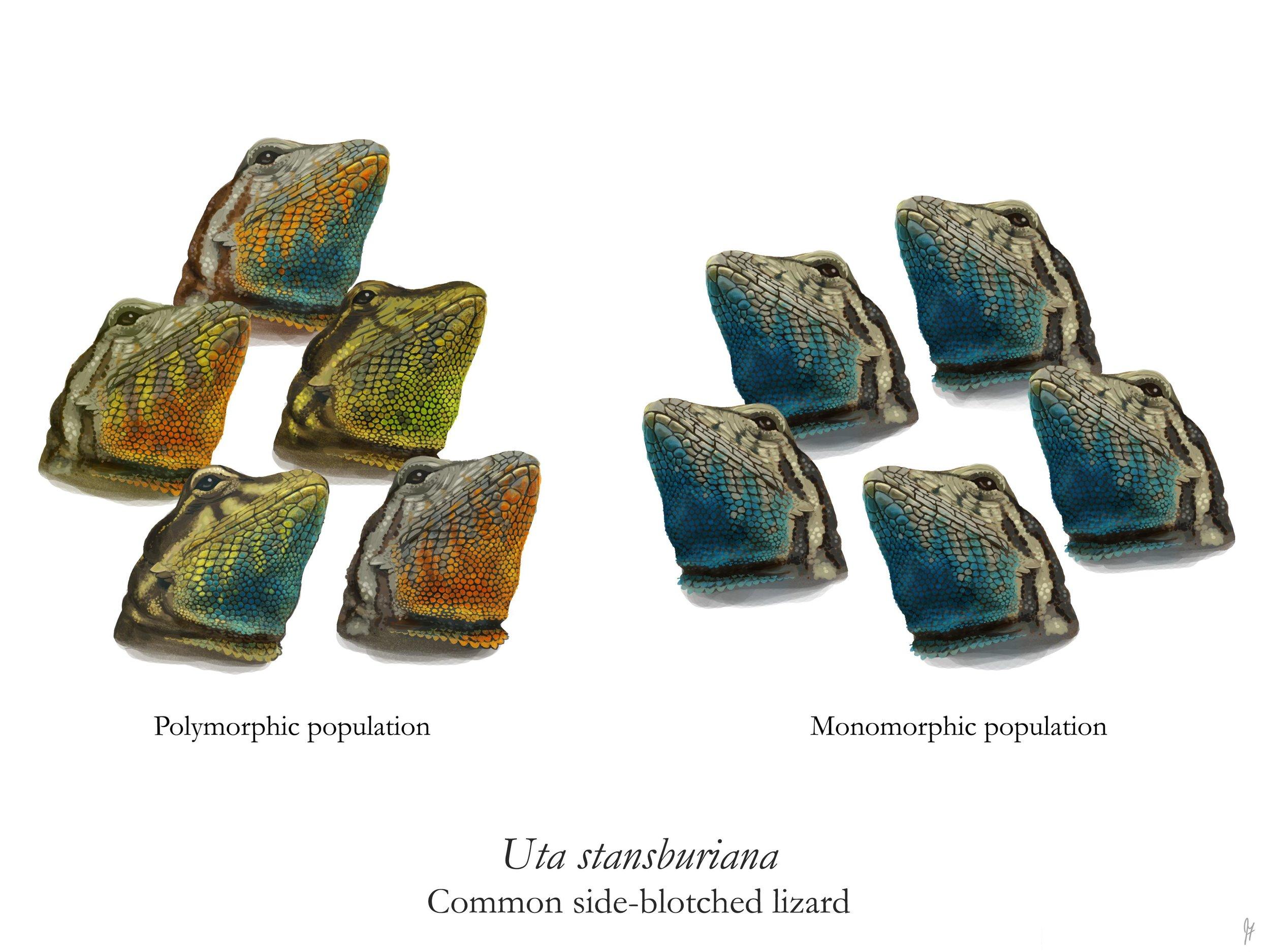 Mono vs Polymorphic Populations