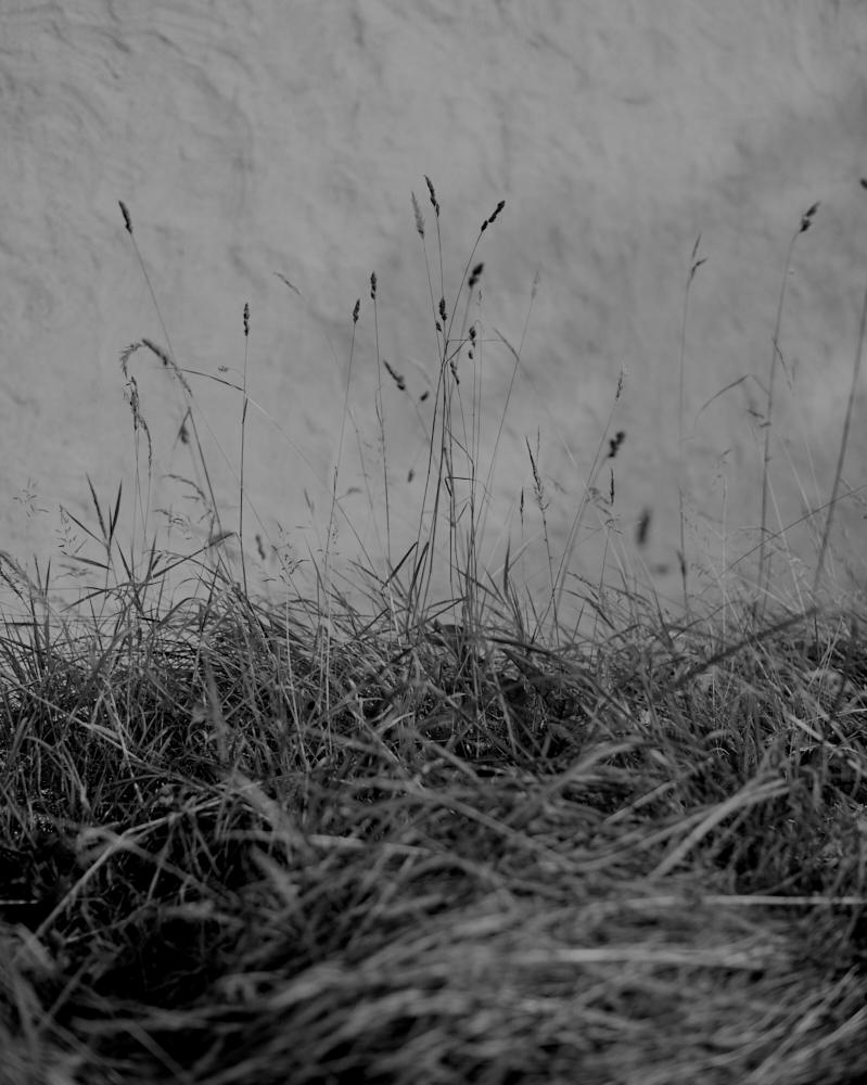 Garden_008.jpg