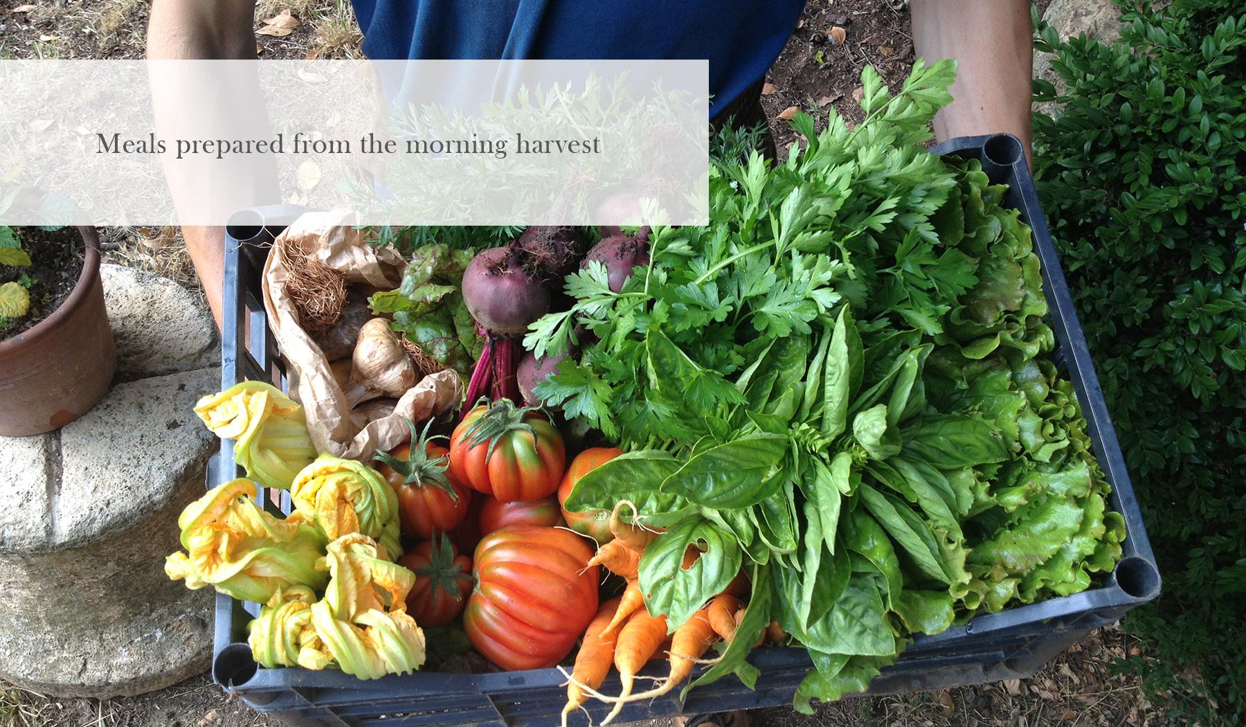 VE_Harvest.jpg