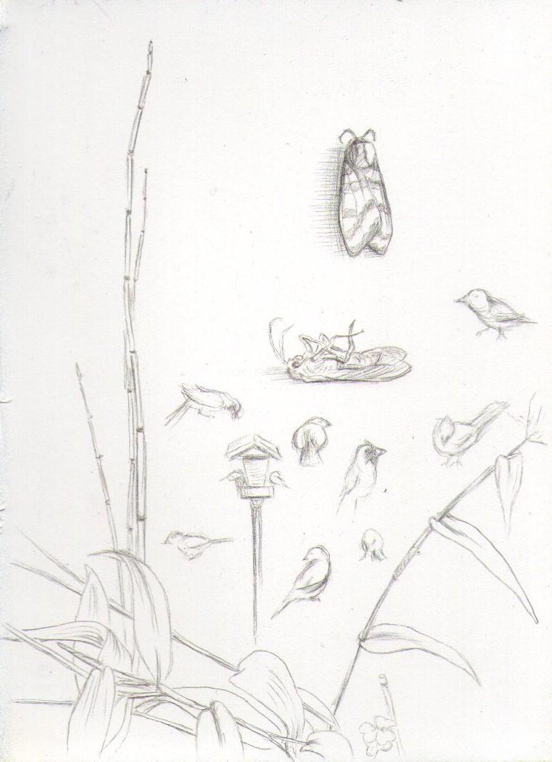 Garden studies001.jpg