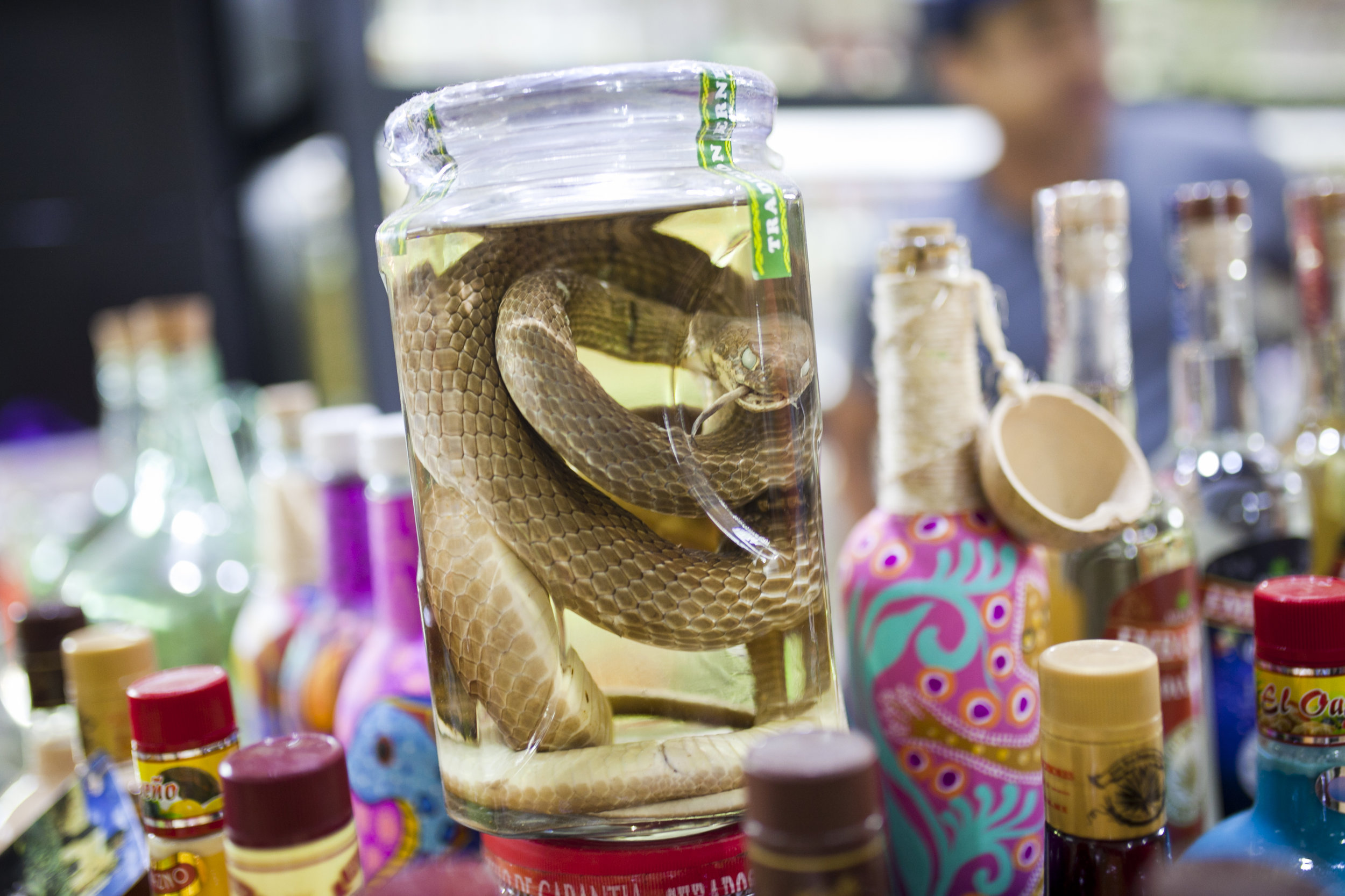 snake in jar_.jpg