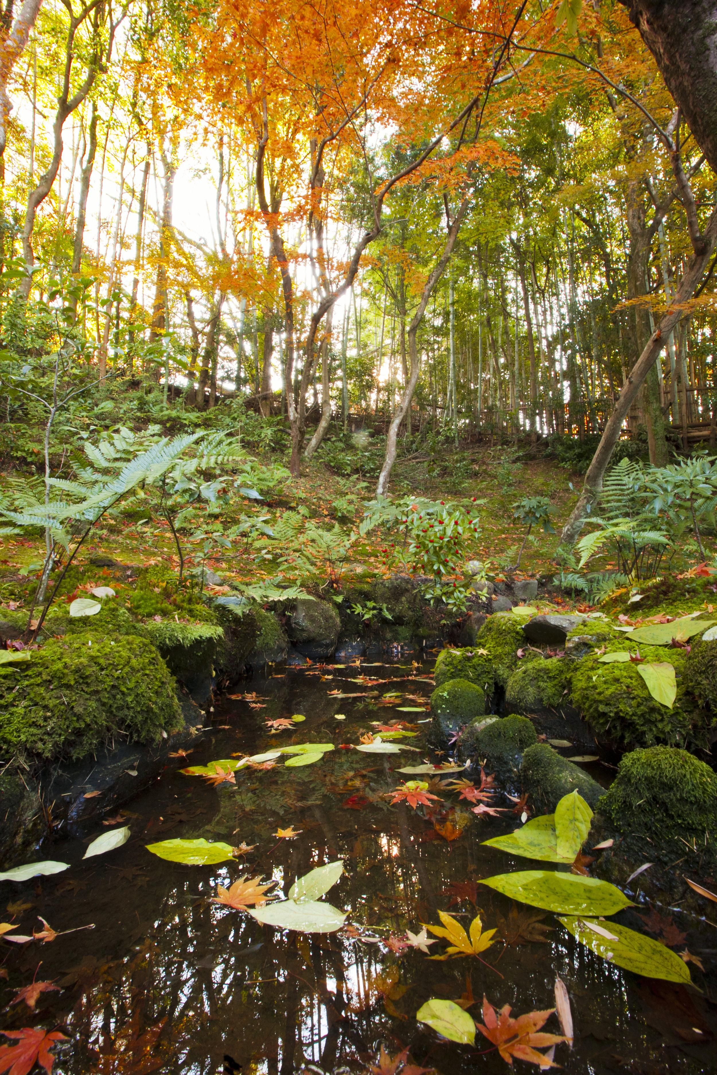 nara garden stream reflect.jpg