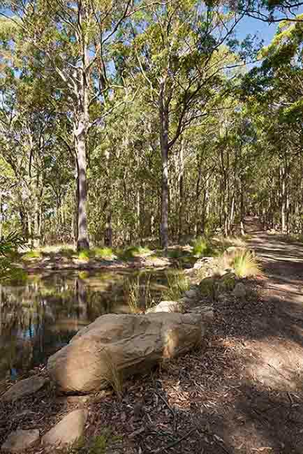 R157512-09-Forest-Edge-Garden-Dianna-Snape.jpg