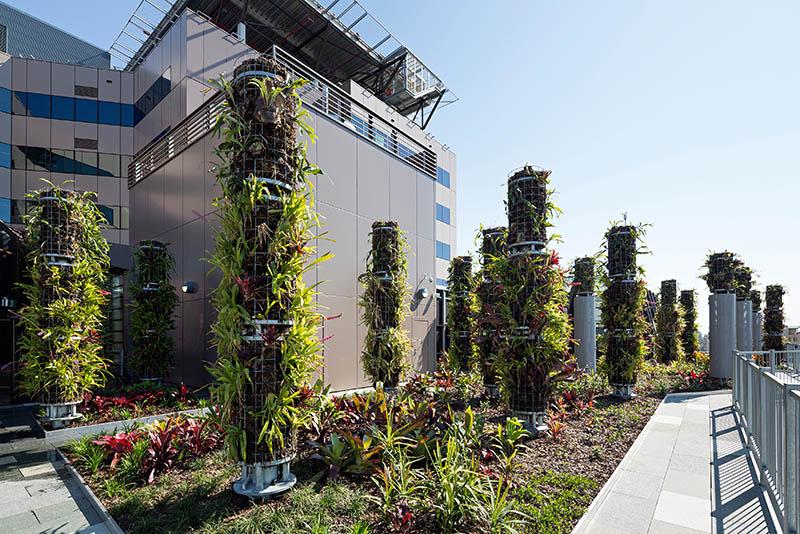 2016670-07-LCCH-CYMHS-Gardens-and-Epiphyte-Columns-Christopher-Frederick-Jones.jpg