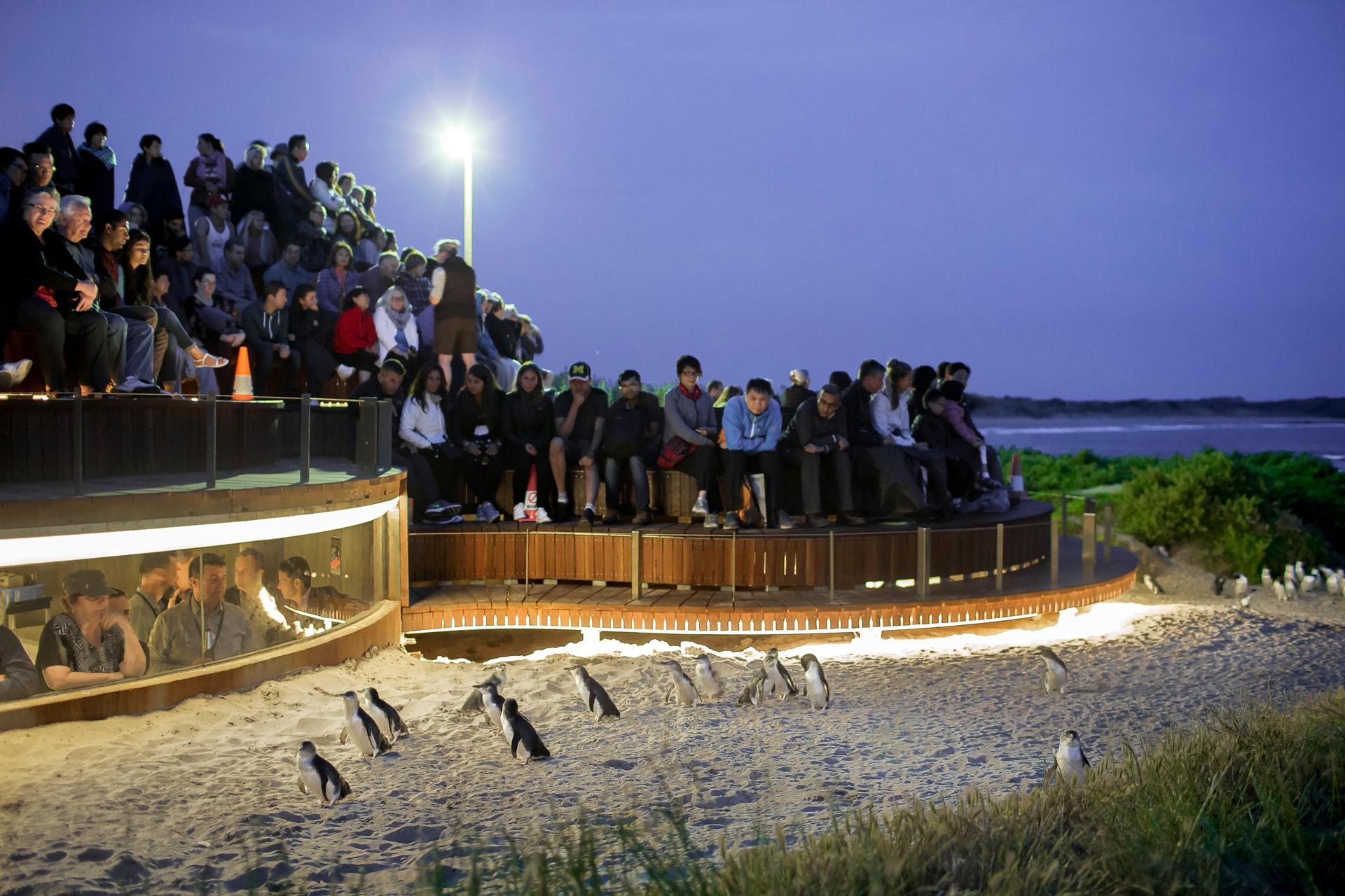 VIC6995-04-Penguin-Plus.jpg