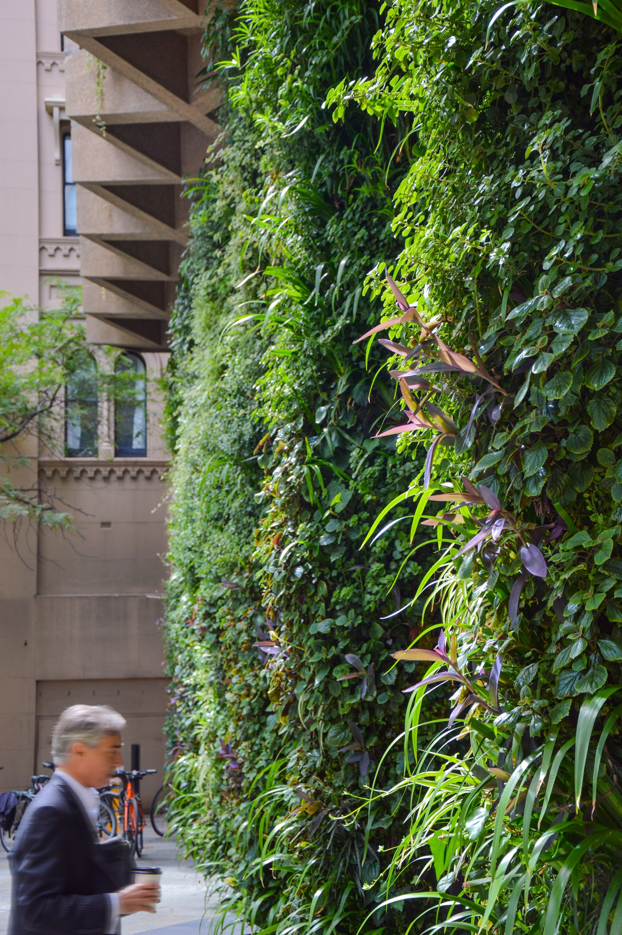 01---Colonel-Light-Centre-Forecourt-Green-Wall---Daryl-Tian.jpg