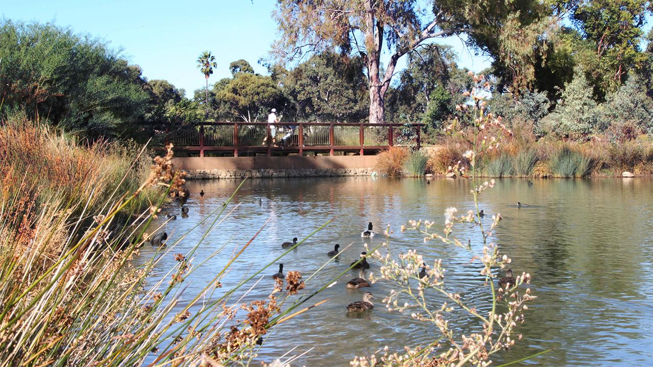 08-Oaklands Park and Wetland-Alex Lock MASTER.jpg