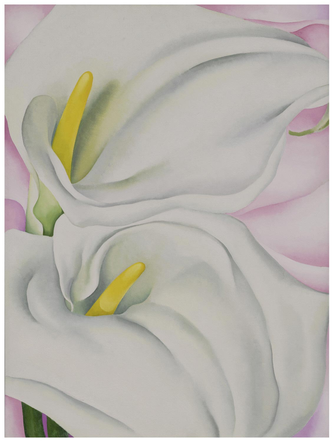 Georgia O'Keeffe, Two Calla Lilies on Pink  Philadephia Museum of Art, 1928