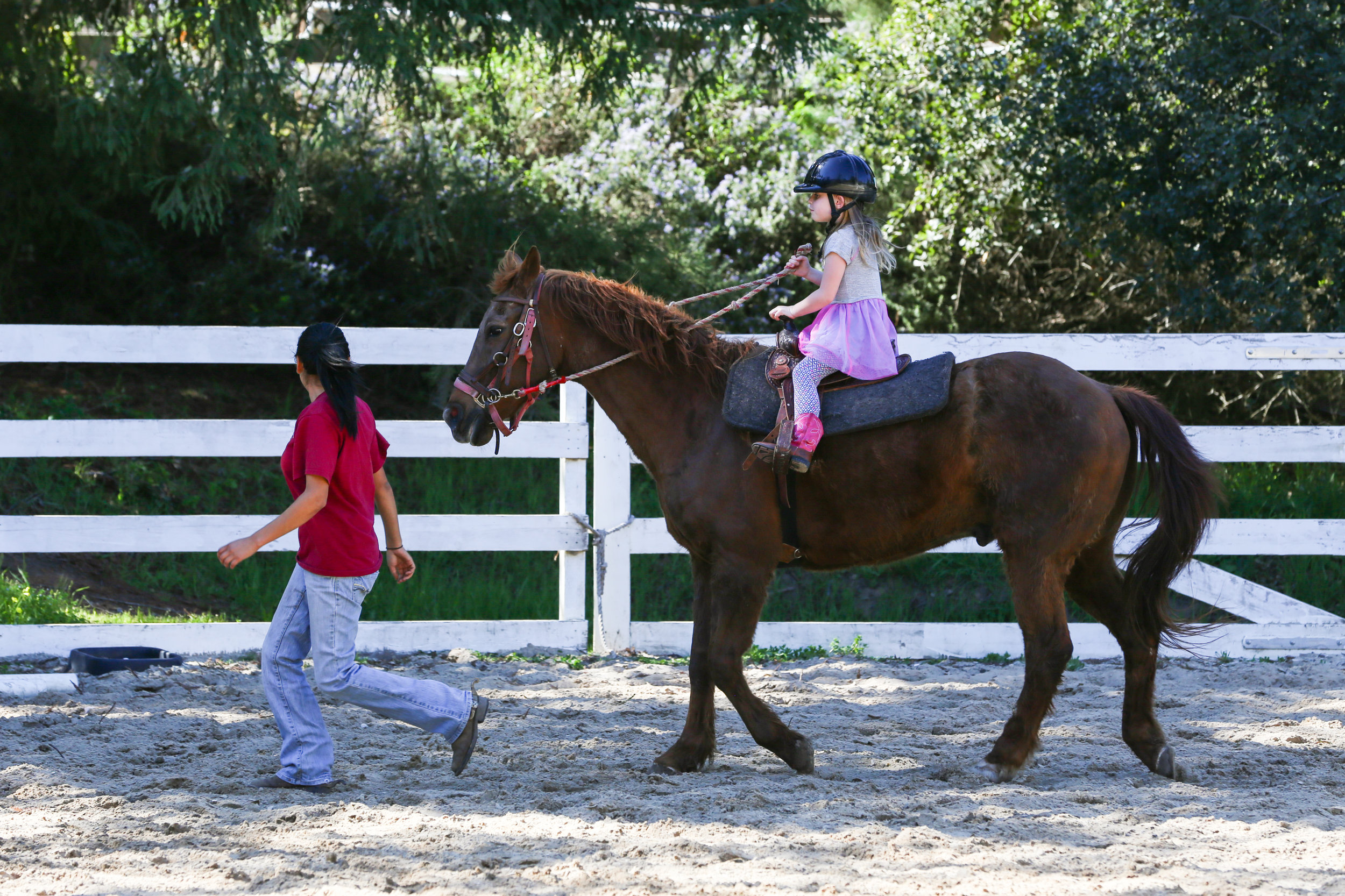 riding lessons hidden hills ranch