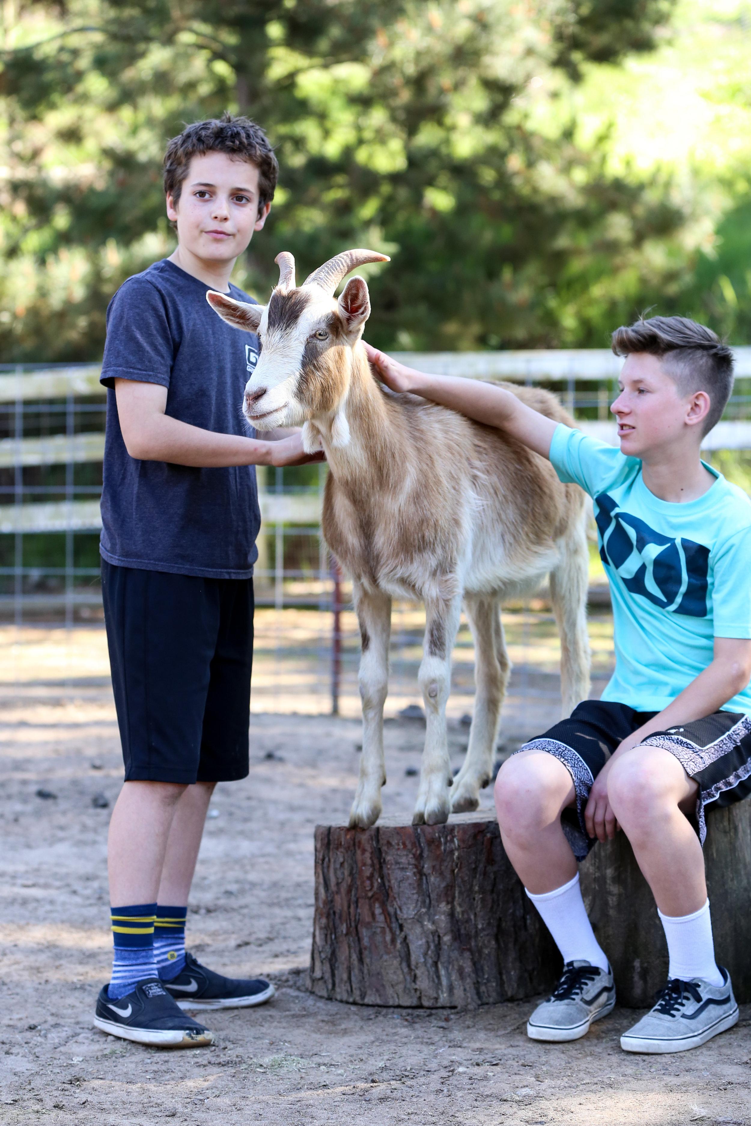 hidden hills ranch goat farm