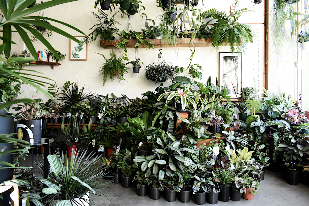 CADABBRA Plantsmith_3- Photograph by Josh Stapleton.jpg