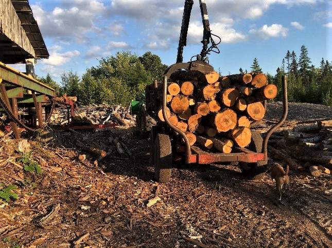 Strengthen forest-based firms to grow sustainable economies