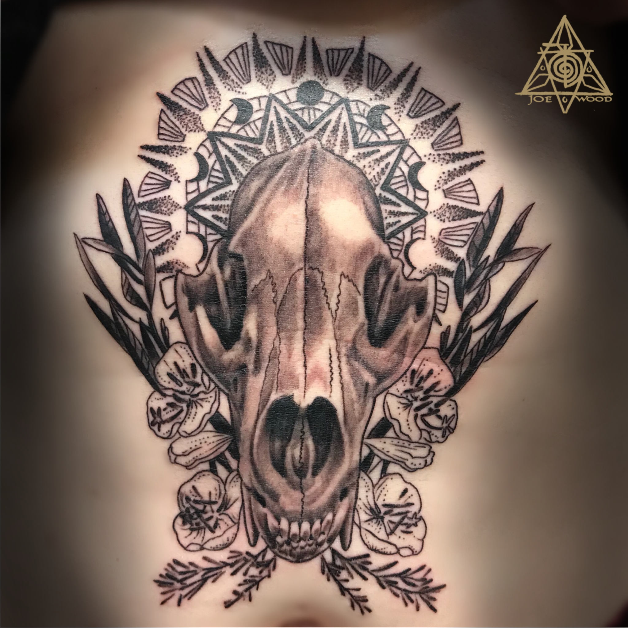Dire wolf skull with geometry by Joe Wood