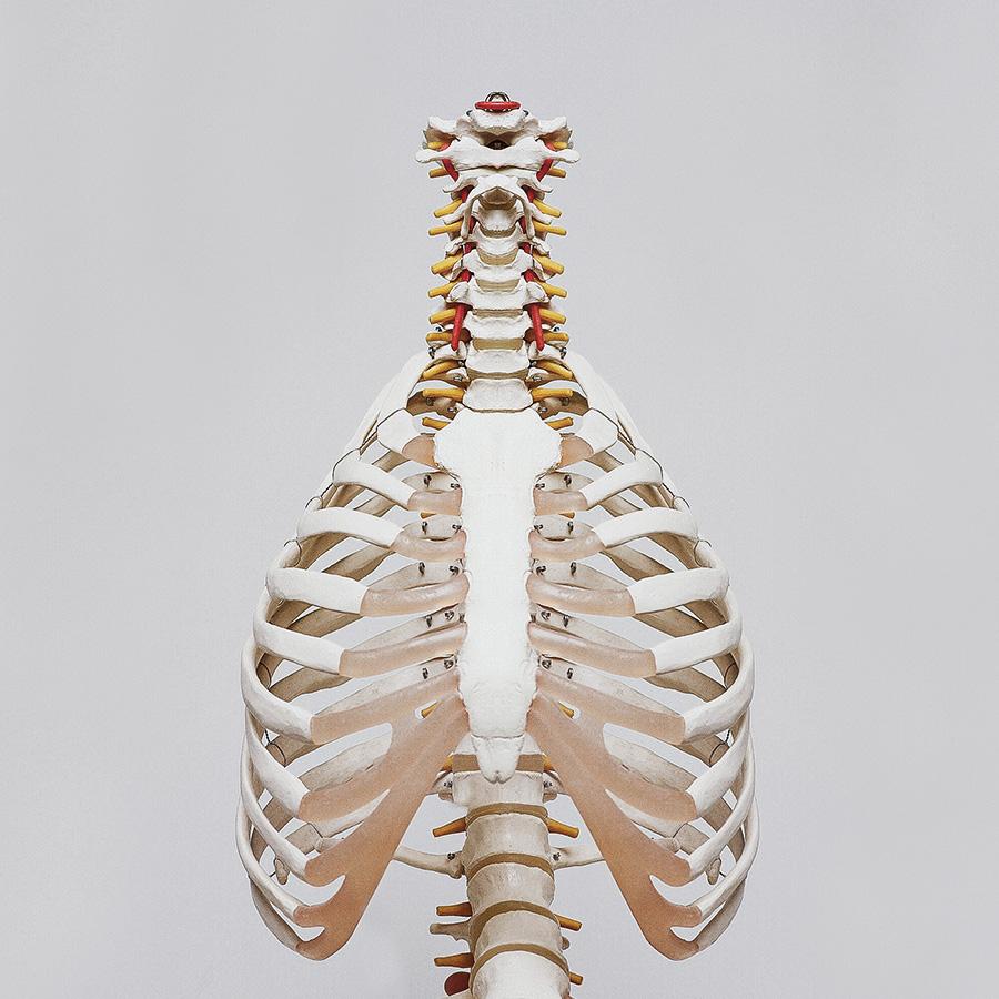 Anatomy -