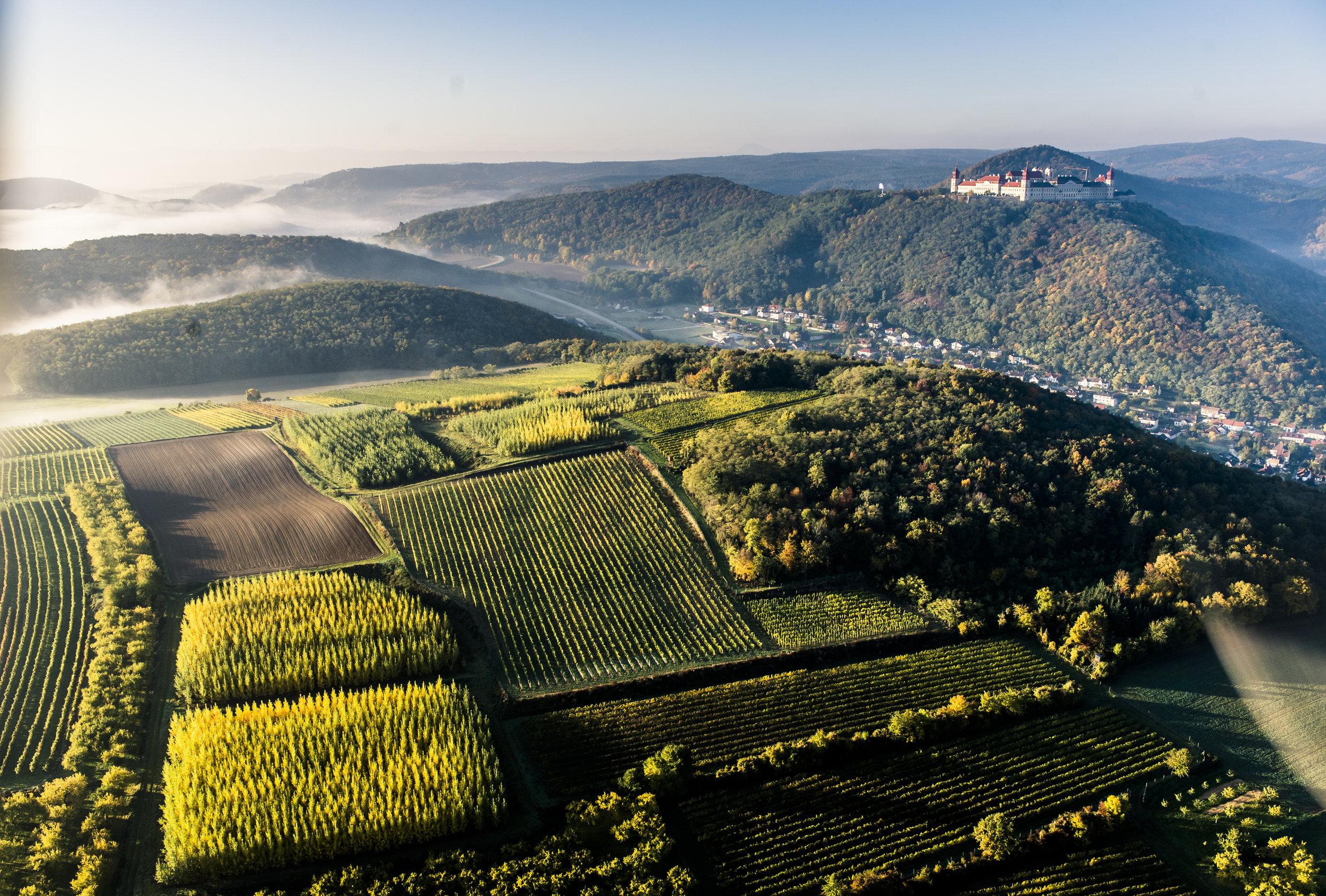 Ried Herrentrost - Die Riede Herrentrost befindet sich in Krems-Thallern und ist eine sehr frühreife Lage. Ein kleiner Weingarten hier ist mit der Sorte Roter Traminer bepflanzt, den wir in besonderen Jahren auch reinsortig ausbauen.
