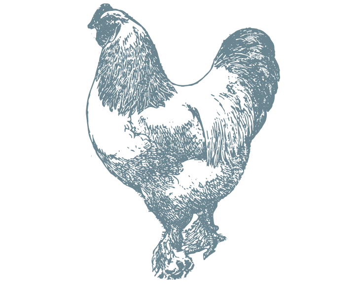 chicken-8x10.png